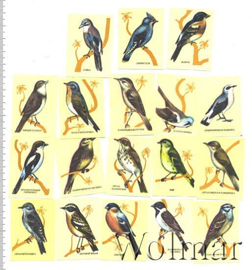 Певчие птицы калужской области